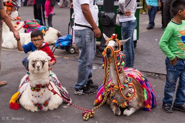 peru_lima_llama_alpaca