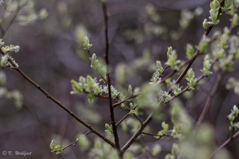 nature grythyttan-2