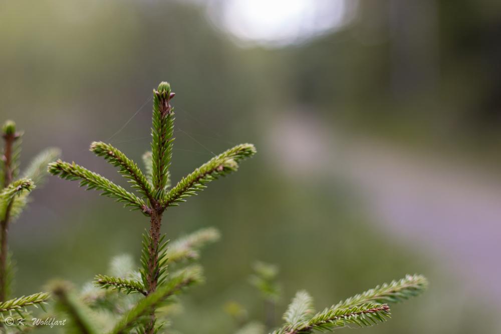 nature grythyttan-3
