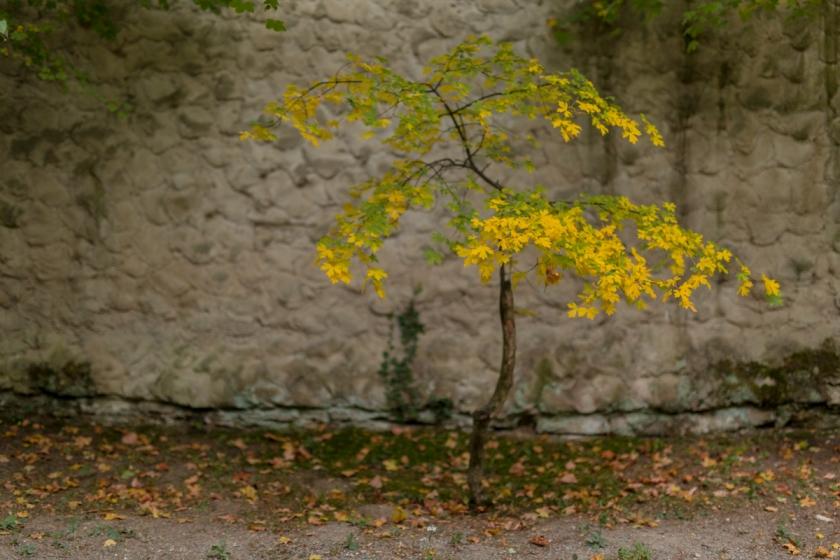 kromeriz_castel_garden-14